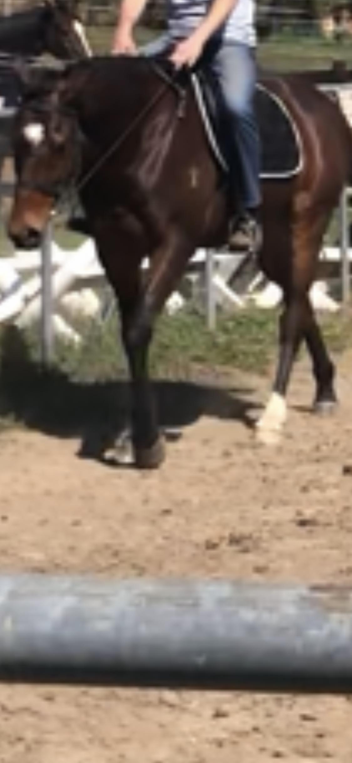 Thoroughbred gelding